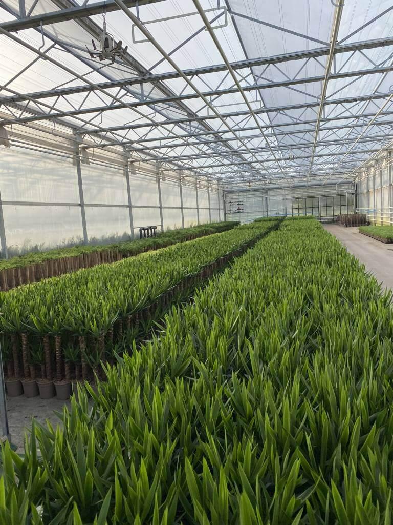 Zavlažovací systém pro skleníky
